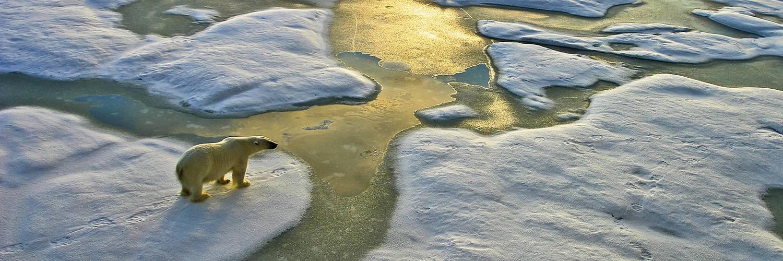 Spitzbergen Kvitöya Reise - Eisbär auf Meereis
