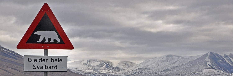 Eisbären - ein Highlight jeder Spitzbergen Reise