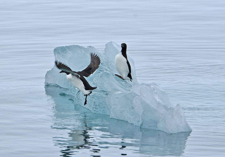 Lumen auf Eisberg