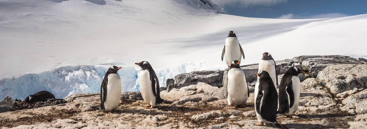 reise-antarktische-halbinsel-eselspinguine-oceanwide