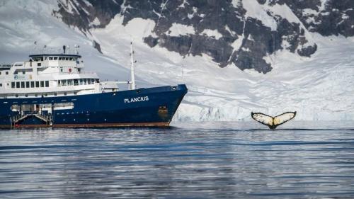 PLANCIUS in der Antarktis