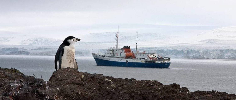 antarktische-halbinsel-expedition-ushuaia-pinguin-vor-schiff